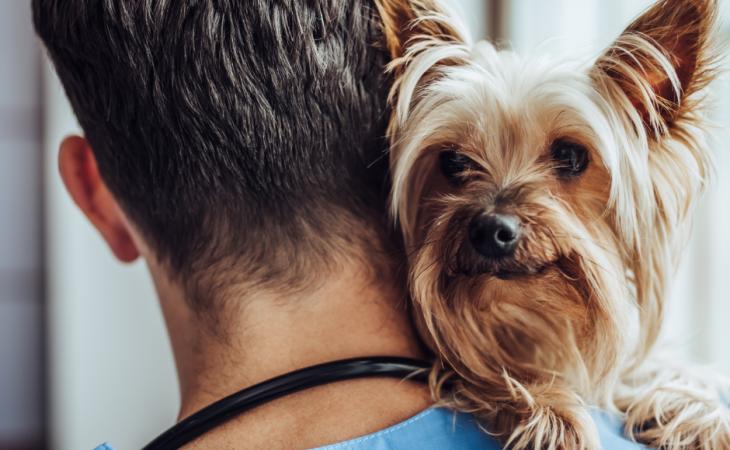 Vacinas para seu Pet