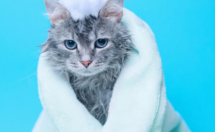 Como dar banho em seu gato