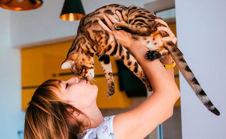 O gato bengal para pessoas alérgicas