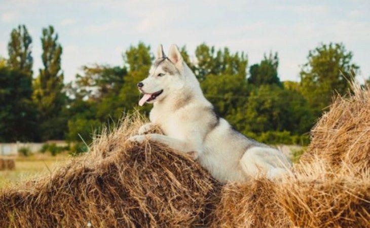 Cão de campo: Ajuda ou atrapalha na lida?