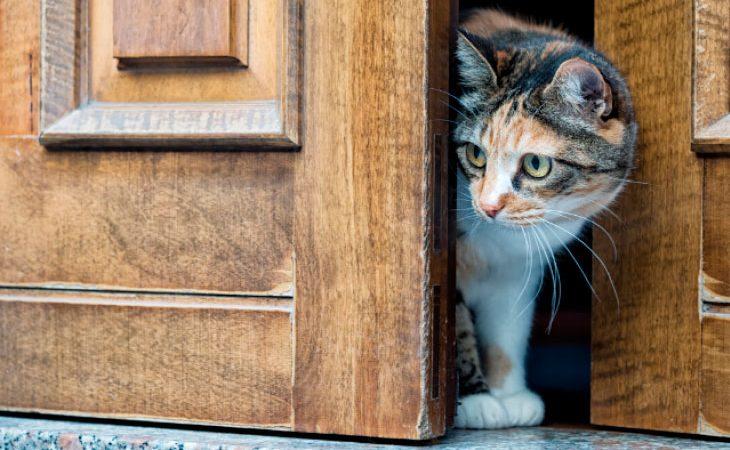 Meu gato detesta porta fechada: o que fazer?