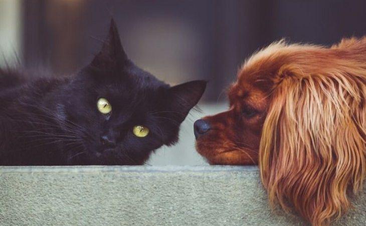 Como limpar as orelhas de cães e gatos