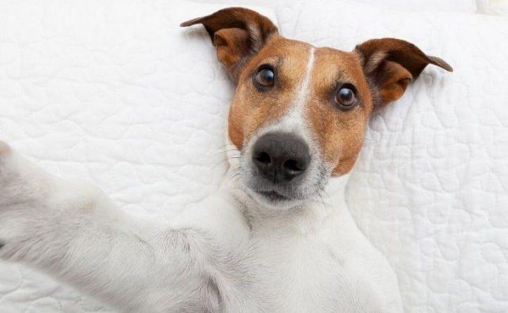 É preciso limpar os olhos dos cães? Como fazer isso?