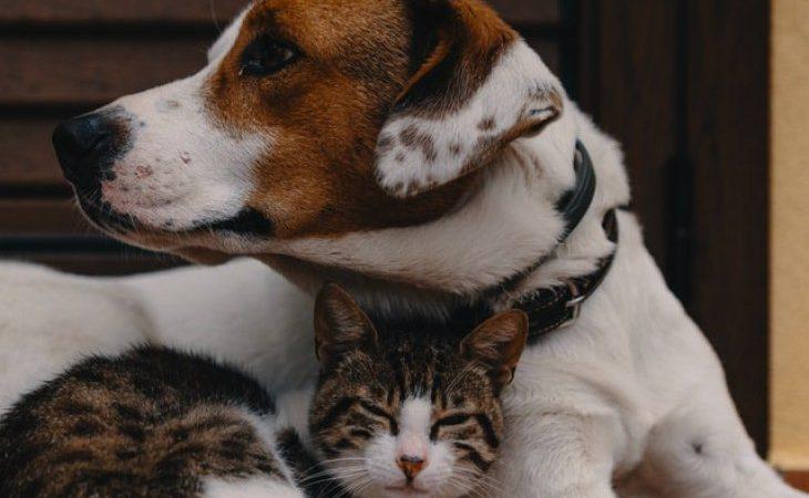 Como limpar a orelha do seu cachorro ou gato?