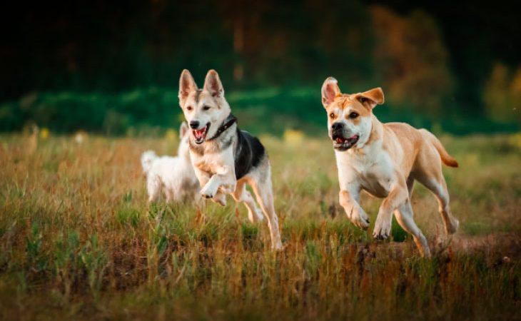 Live Canal Rural – Como manter a saúde do seu cachorro no campo?