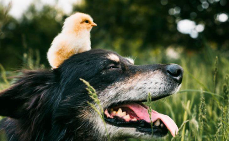 Cães da cidade e cães do campo