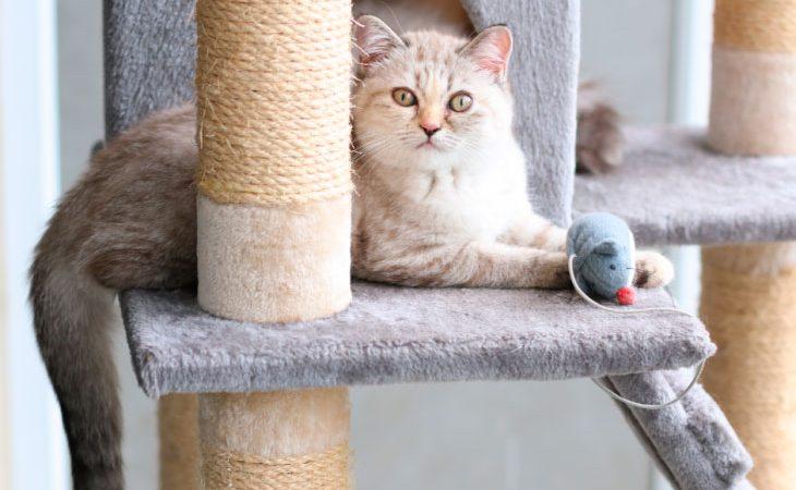Território do gato