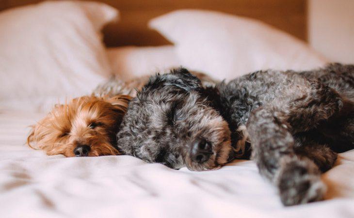 Dormir com seu pet na cama