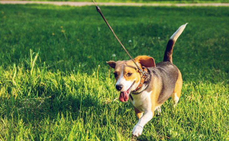 Como deixar o passeio mais divertido para o seu cão