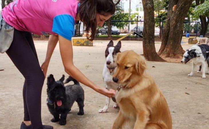 A profissão de 'Dog Walker'