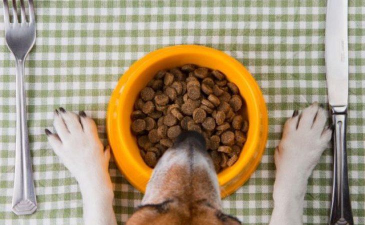 Alimentação para o seu pet!