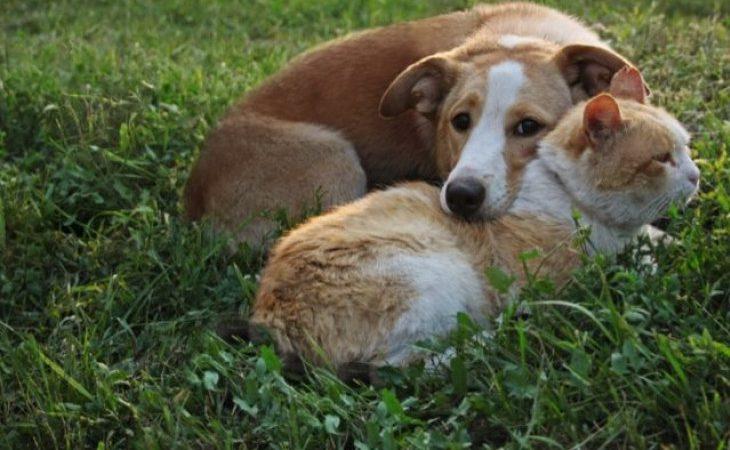 Como cuidar de seus pets no isolamento imposto devido ao corona vírus