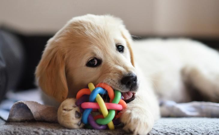 O enriquecimento ambiental para o cão