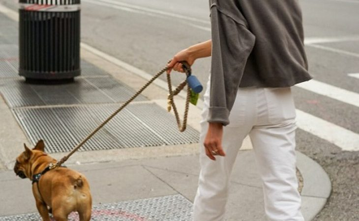 Restrições para passear com seu cão