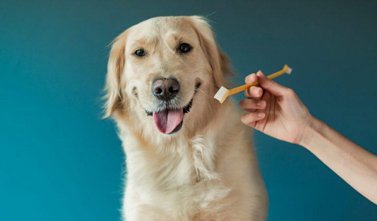 Escovar os dentes do seu cachorro